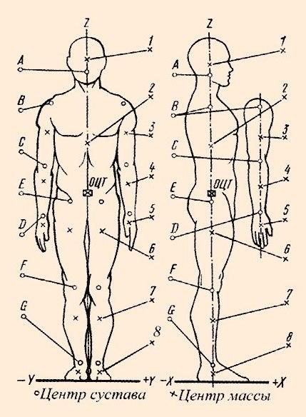 Центры суставов и центры масс частей тела